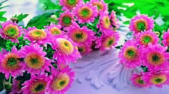hd flower images pink flowers beautiful hd wallpaper flowers desktop hd wallpapers stylishhdwallpapers