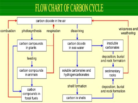 flow diagram of carbon cycle flow diagram of carbon cycle choice image how to guide