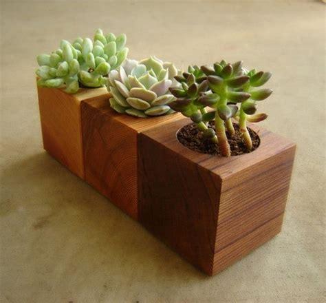 vasi per piante migliori vasi per piante grasse piante grasse vasi per