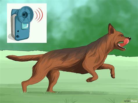 tenere lontano i gatti dal giardino 3 modi per tenere i cani lontani dal tuo giardino