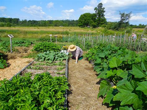 Vegetable Garden Care Got Questions About Growing Vegetables And Fruit In Maine