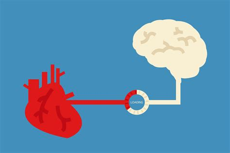 heart and brain an if you look after your heart you help your brain diseases of the two organs are linked