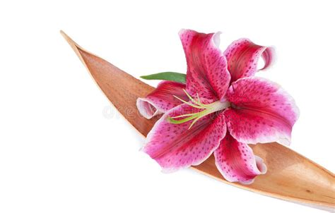 giglio viola fiore l insieme viola fiore giglio su un coco secco