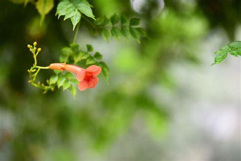 woran kann es liegen dass die hupe nicht funktioniert trompetenblume bl 252 ht nicht 187 woran kann es liegen