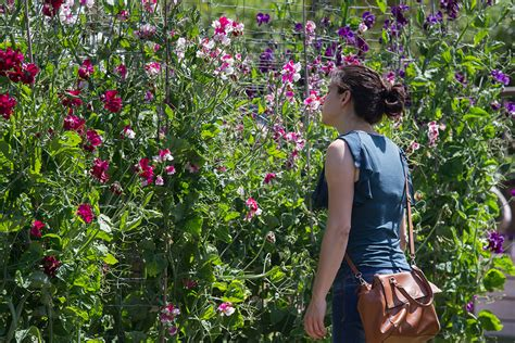 fragrant flowers for national fragrance week the