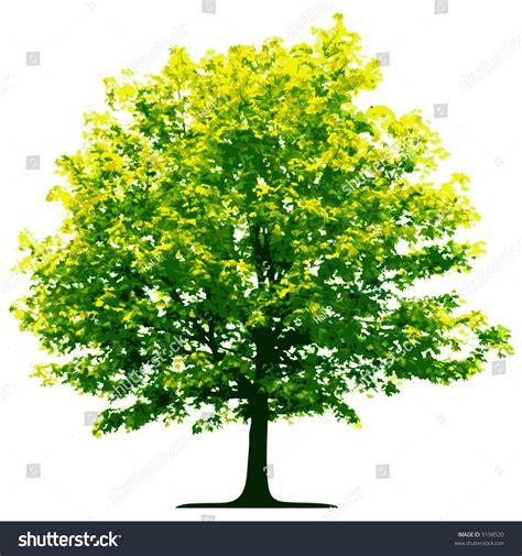 tree pictures tree vector stock vector 9198520