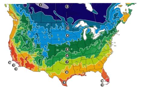 american plant zones map u s d a plant hardiness zone map america