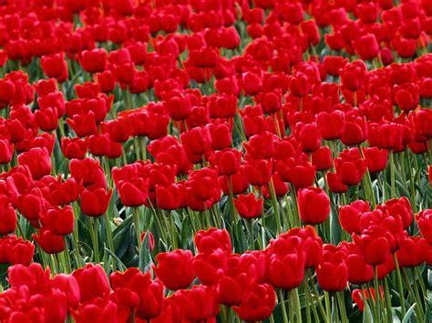 desktop gratis fiori sfondi per desktop fiori