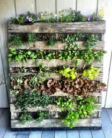 Vertical Pallet Gardens Home Gardening In Spaces