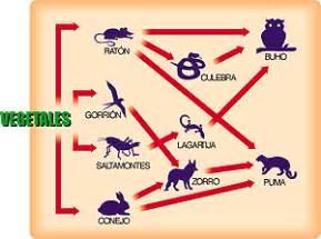 significado de cadenas alimenticias definici 243 n de tr 243 fica 187 concepto en definici 243 n abc