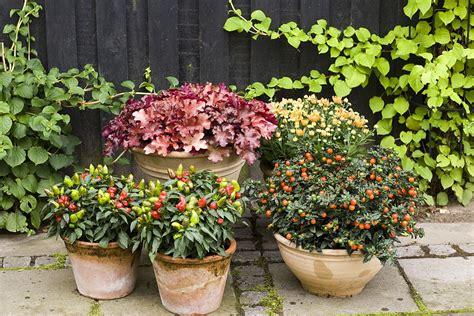 Blumen Im Garten 3261 by Ardeiul Decorativ La Ghiveci Se Poate Folosi Pentru