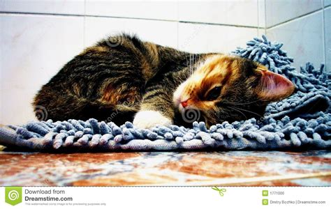 Cat On Rugs by Cat On Soft Rug Stock Photo Image 1771000