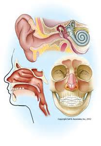 Ear Nose And Throat Stony Point Surgery Center Specialty Ear Nose And Throat