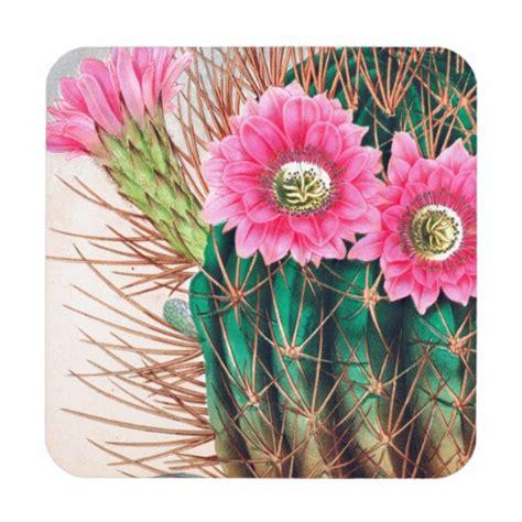 pretty cactus beverage coasters zazzle