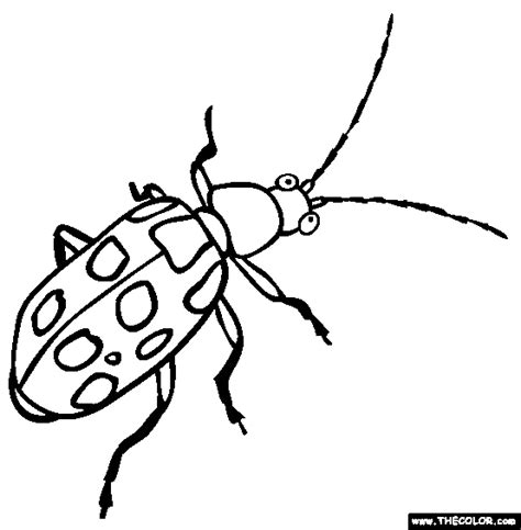 arthropod coloring page 75 arthropod coloring page realistic butterfly
