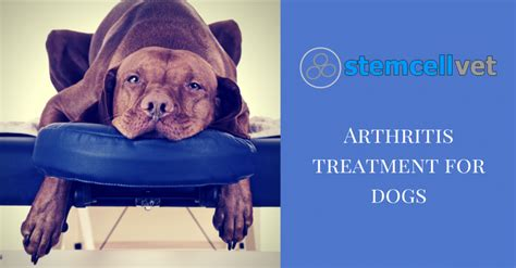 arthritis medication for dogs arthritis treatment for dogs stem cell vet uk