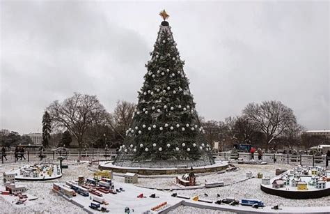 national christmas tree washington dc