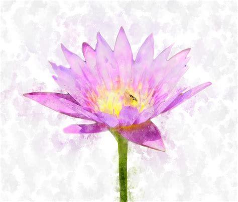 Kaca Cermin Teratai Pink ilustrasi gratis teratai bunga warna merah muda gambar gratis di pixabay 2159949