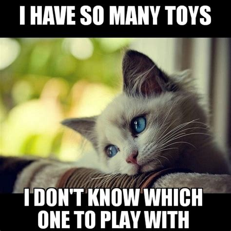 Cat Problems Meme - i found a meme titled first world cat problems had to do