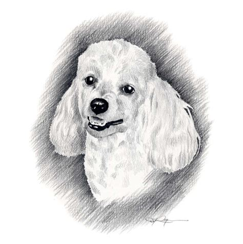 how to a poodle how to draw a poodle step by step alltoys for