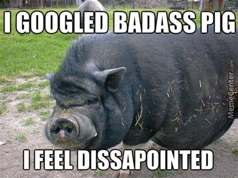 Pig Meme - 12 pig memes sure to put a smile on your face