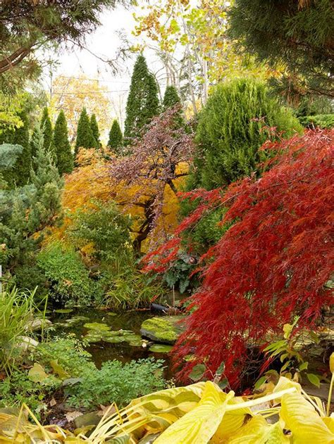 Fall Landscaping Ideas 13 Best Images About Fall Landscaping Ideas On Trees And Shrubs Trees And Pits