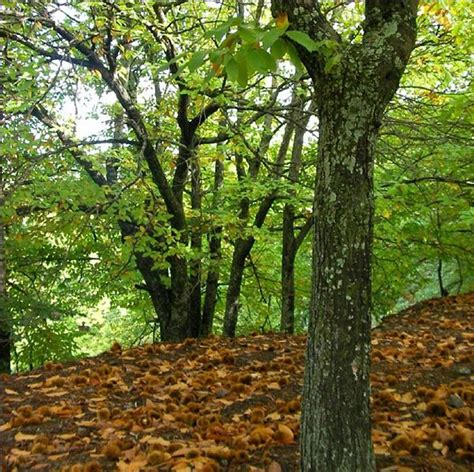 variedades belen los 17 bosques m 225 s bonitos de espa 241 a para hacer senderismo