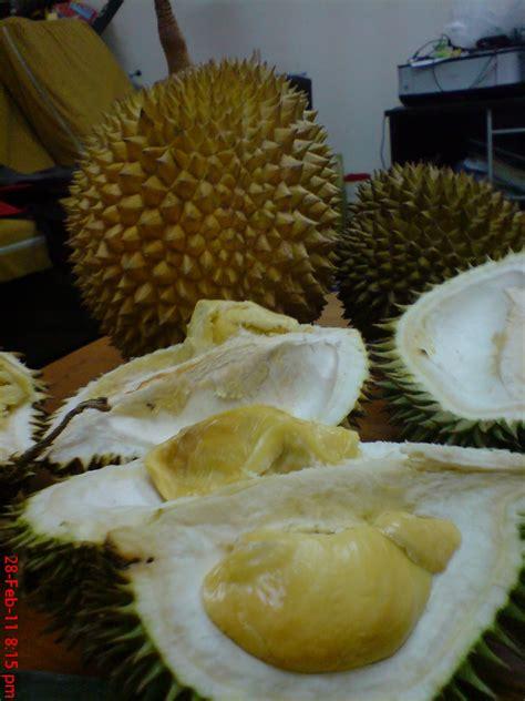 terajubintang durian muar