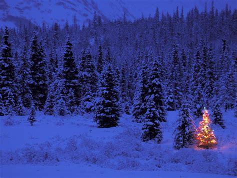 wallpaper christmas tree wallpapersafari