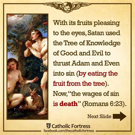 christmas tree symbolism catholic beatiful tree