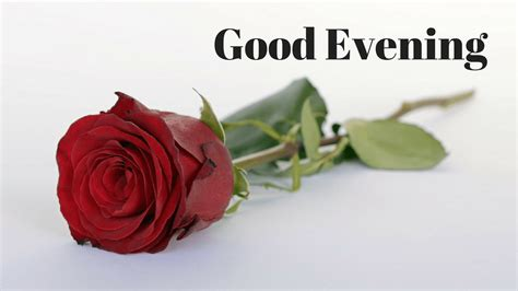 Evening Roses Images evening images free for whatsapp