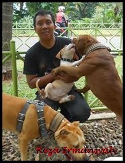 Mengenal Dan Menyayangi Anjing Dan Anak Anjing orang islam boleh pelihara anjing