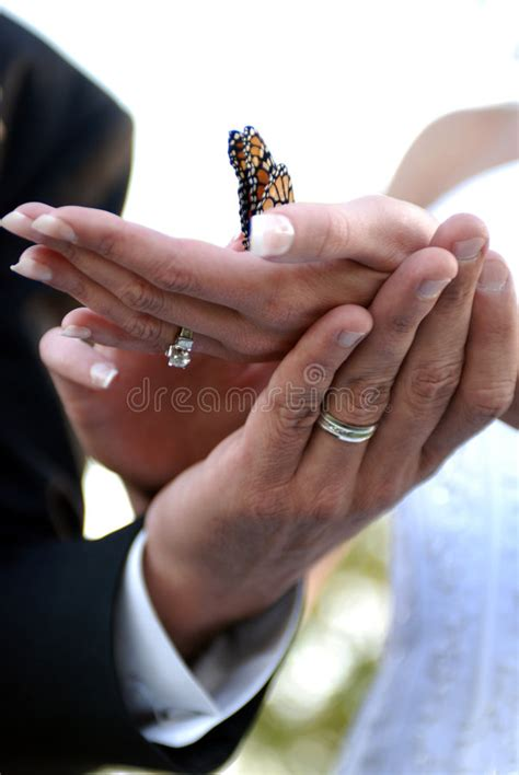 Wedding Holding by Wedding Holding Butterfly Stock Photo Image Of