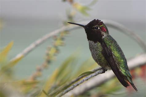 hummingbird hero academy next website