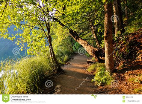 what goes on a tree fallen tree beautiful forest road stock photo image