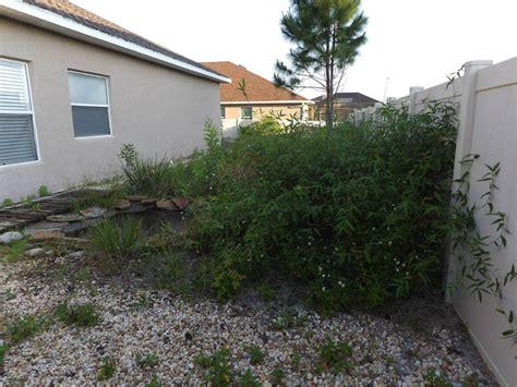 yard clean up service palmetto parrish bradenton fl