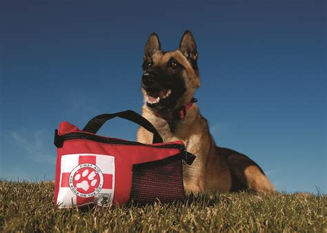 dogs aid how to make a aid kit for your