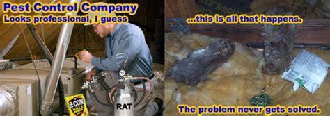 best poison for mice in attic the best way to kill mice poison or snap traps