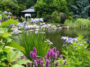 backyard pond plants garden ponds ramblin through dave s garden