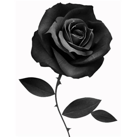 rosa nera fiore consegna fiori a domicilio omaggi floreali vendita on line