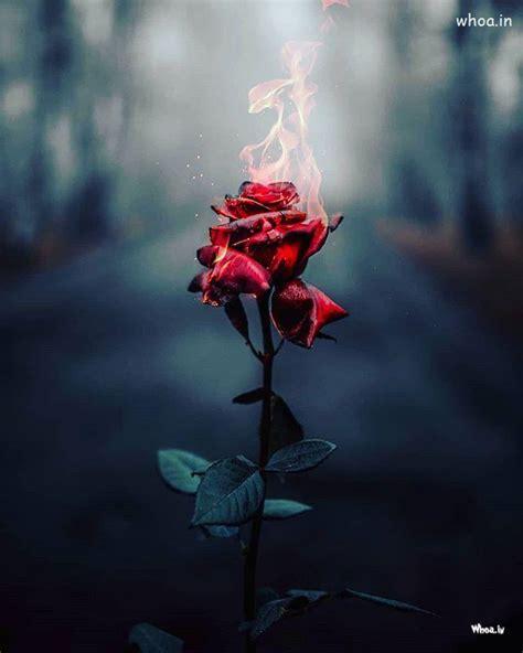 burning rose image hd wallpaper burning rose wallpaper