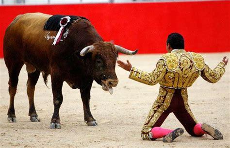fighting facts bull fighting bull fighting spain