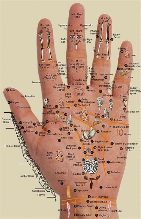 hand chart  map acupressure points  organs
