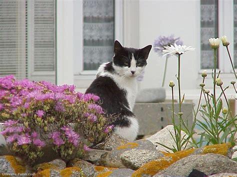 fond d 233 cran de chat chat noir et blanc dans un jardin