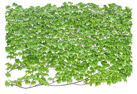 imagenes png vegetacion marcos para fotos marcosscrap arboles jardines y
