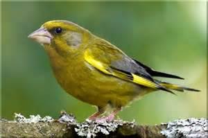 oiseaux de nos jardins photos oiseau tete bec