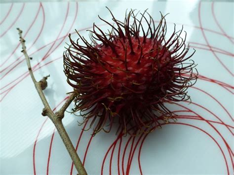 fruit with spikes my new favorite fruit rambutan ma vie trouv 233 e