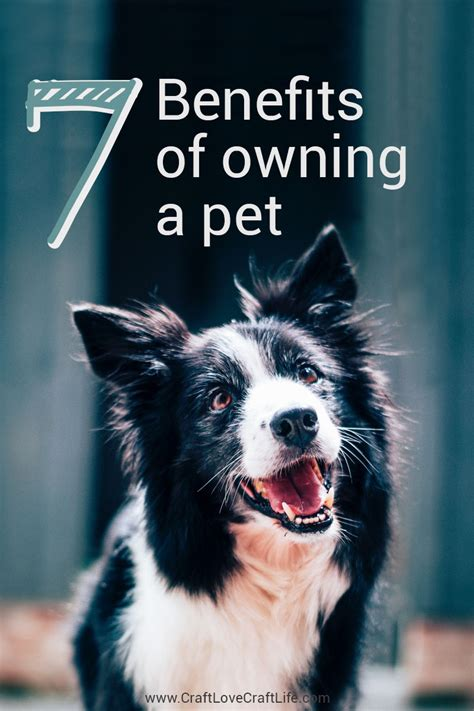 7 Benefits Of Owning A Pet 7 benefits of owning a pet pros of pet ownership