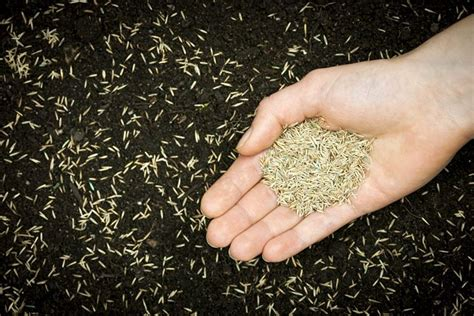 tappeti erbosi prezzi tappeto erboso prato come realizzare un tappeto erboso