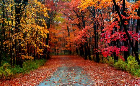 The In Autumn autumn season most beautiful wallpapers hd